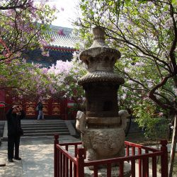 Begonia in bloom season in Fayuan Temple